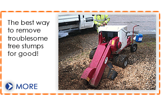 Stump grinding from Dial a Digger in Hampshire